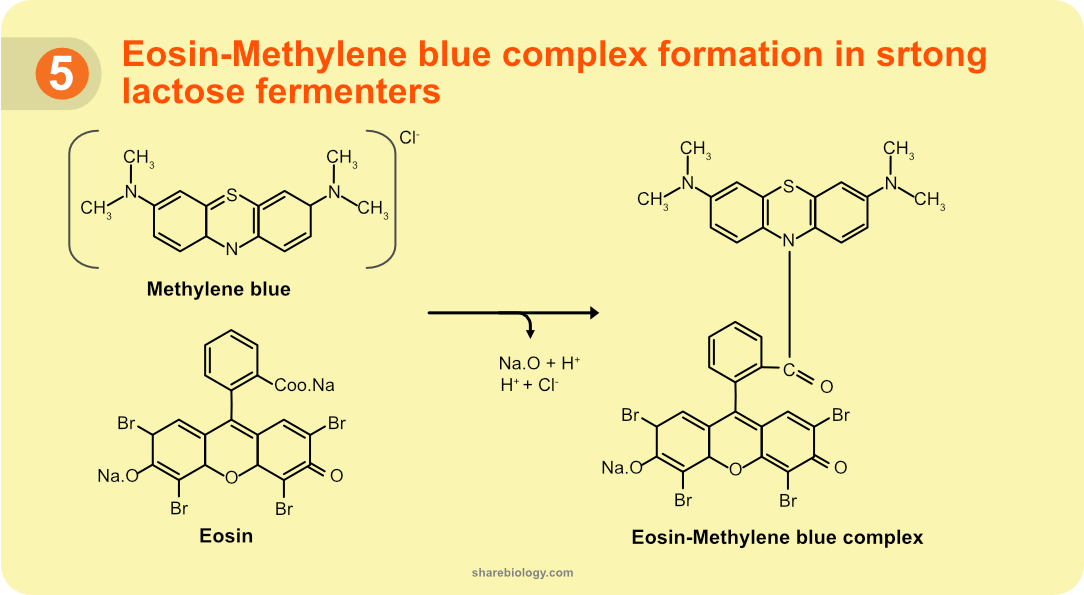 structure of Eosin Methylene Blue complex