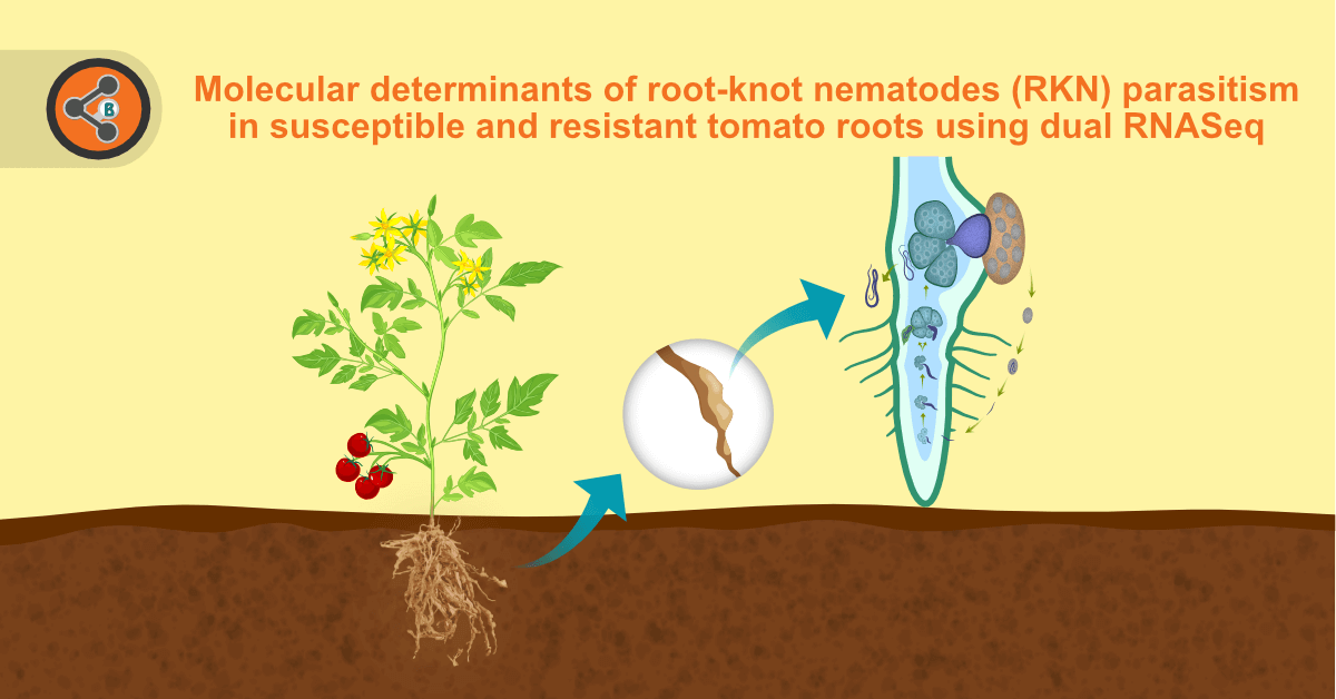 title image of RKN parasitism in susceptible and resistant tomato roots