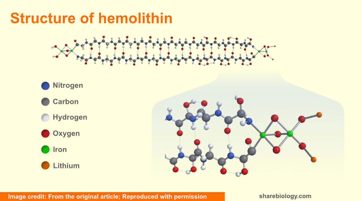 Hemolithin structure