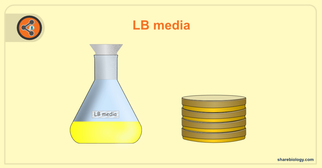 LB media