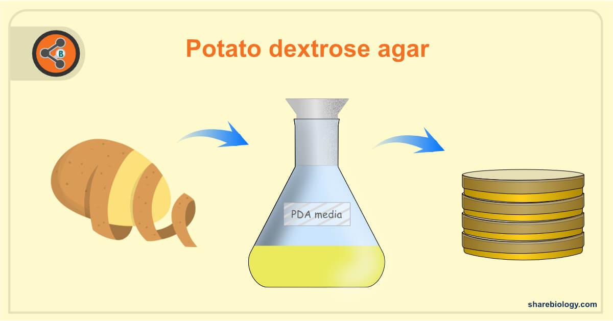 steps involved in potato dextrose agar preparation